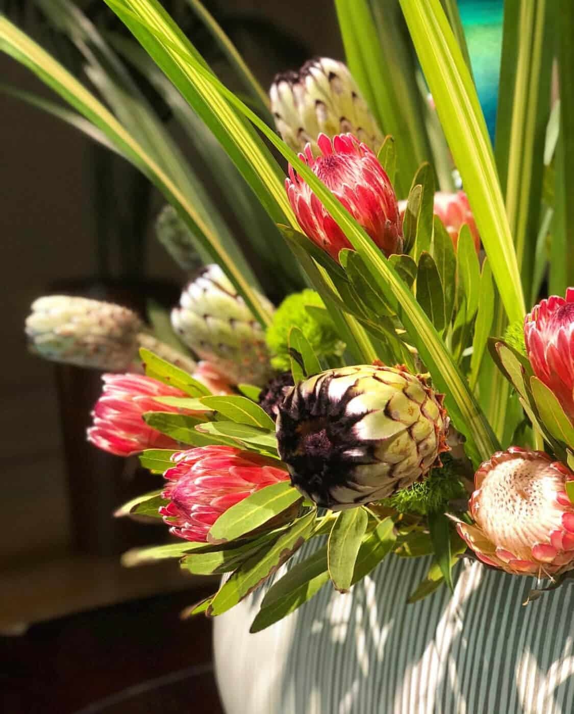 Protea display at The Umstead Hotel and Spa